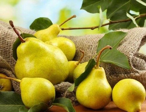 Pears: 'Gift of the Gods'